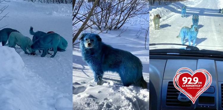 aparecen perros azules Rusia